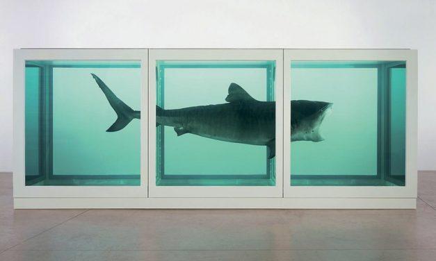 Pericolo squali a Roma